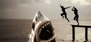 summer-hai shark 484331